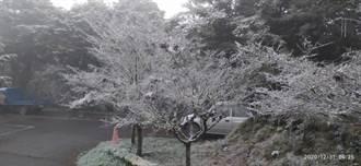 真的下雪了!台東南橫向陽上午9時降下2020初雪