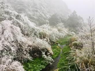 寒流急凍台中山林 雪白霧淞超浪漫