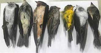 美數百萬禽鳥1月內離奇集體暴斃 專家:野火恐改變遷徙模式、消耗能量