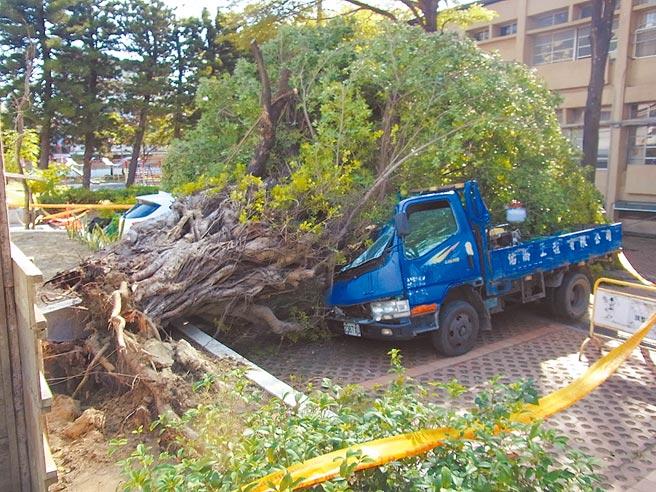 寒流帶來罕見強風,吹倒雲林縣北港鎮南陽國小百年老榕樹,壓毀1輛小貨車車頭。(張朝欣攝)