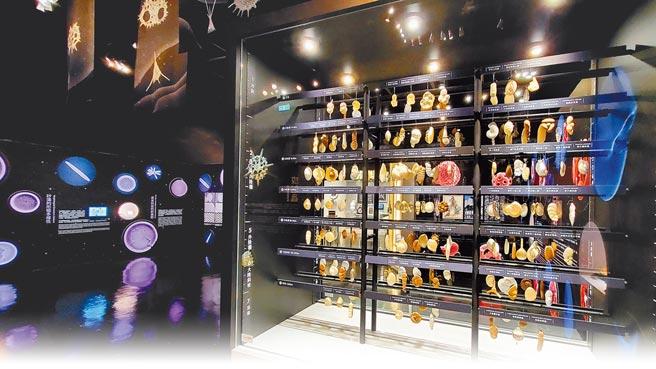 台中科博館《微美幻境-海洋微化石》特展,展示180餘件有孔蟲放大模型櫥窗展場。(科博館提供/陳淑芬台中傳真)