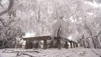 今年第一場雪 太平山絕美銀白仙境照曝光
