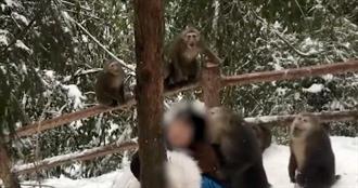 正妹上山遭潑猴圍攻 慘遭霸王硬上「扒衣撕咬頭髮」驚聲尖叫