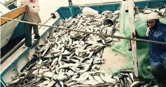 「烏金」不再!彰化烏魚少了近百倍 慘量讓漁民崩潰「油錢都不夠」