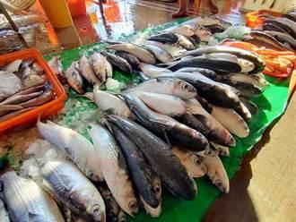 彰化烏魚「慘」量少 漁民崩潰這年難過了