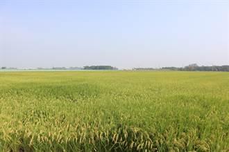 嘉南一期作停灌補助申報率9成 農民、地主私下對半分