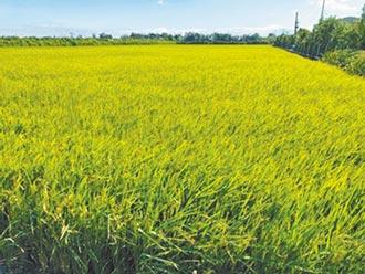 农业新制上路 稻作4选3