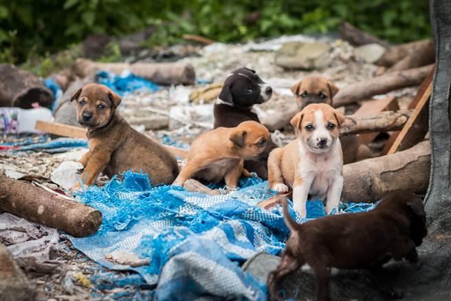 阿嬤每天都會揹著6隻幼犬搭公車,而且一天次數高達3次,原來她是為了帶小狗們與媽媽相聚。(示意圖/達志影像)