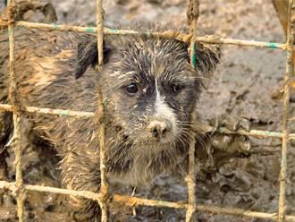 流浪狗覓食頭卡進洞嚇壞偷哭 獲救後頻回頭道謝不願走