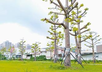 選錯行道樹種 人與環境堪憂