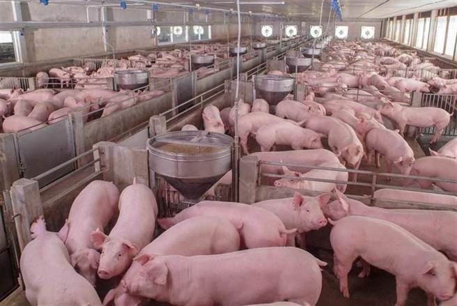 美國萊豬已經開放進口,有便當業者公告,因使用國產豬肉,便當售價調漲5元至10元。對此,行政院表示,已請消保處緊盯市場價格。(報系資料照)
