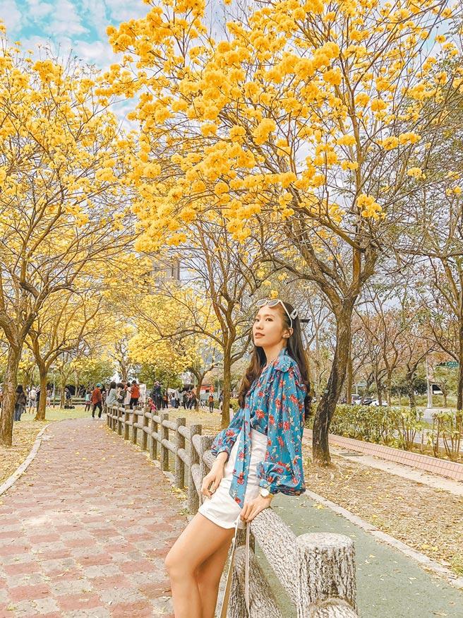 台中市北屯區廍子公園每年黃花風鈴木盛時,吸引很多民眾來拍照。(台中市府提供/盧金足台中傳真)
