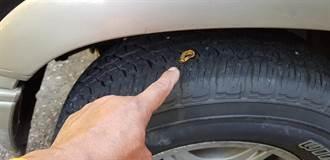 輪胎金光閃閃「刺眼」 駕駛一看大驚「卡著一枚純金戒指」