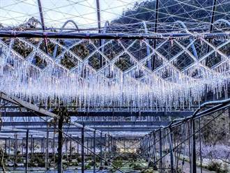 武陵農場驚見「美麗錯誤」 水管防結冰沒關 凍成一幅絕世美景