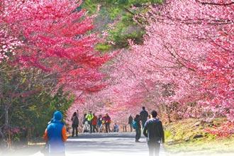 春節嬉遊國旅玩好玩滿