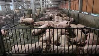 怕萊豬  很多店家用這國豬 內行人揭2關鍵:台灣難追上