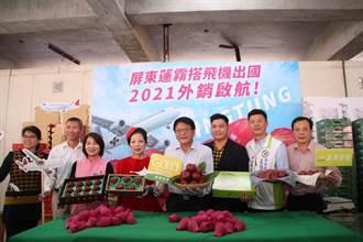 屏東好物拚外銷 2021年屏東蓮霧空運香港啟航