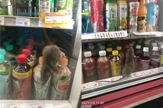 超商冰櫃驚見「大肥鼠」亂竄 網怕爆:不敢買飲料了