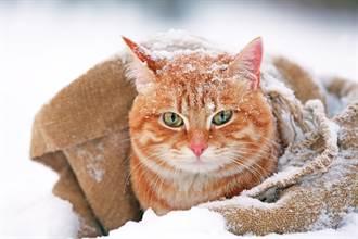 雪地見憔悴橘貓站門外 肉球抵玻璃求救屋主好心疼