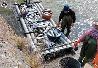 跨年寒流農損出爐!總損失逾2400萬 虱目魚最為慘重