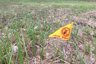 新北校園預定地防治 宣導雙管齊滅紅火蟻