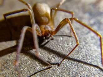 水壺內藏巨大熟蜘蛛 他誤喝整瓶精華崩潰:第8隻腿呢