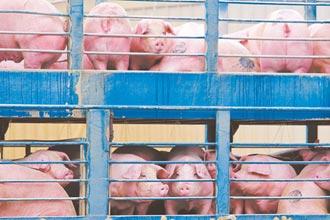 拍賣價格漲1成 還怕買到萊豬 買豬肉難下手 主婦哀號