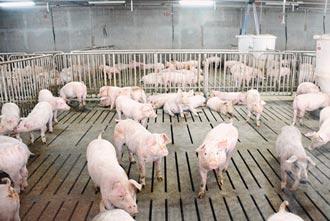 豬農憂 百億基金看得到吃不到