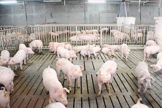 豬農憂萊豬大量進口 市場恐崩盤