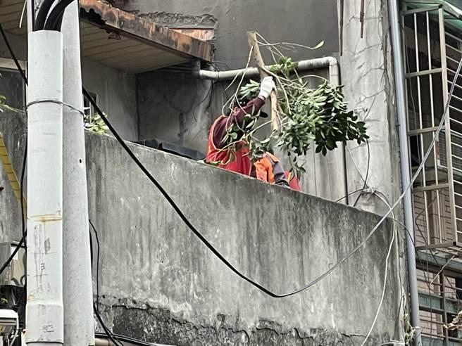 誇張!蘆洲宅遭大樹「霸佔」支離破碎模樣曝光,蘆洲仁愛里長林宏典出資幫忙整修房屋(戴上容攝)