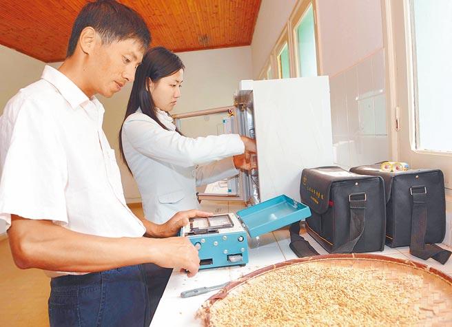 部分奔月水稻種子已經發芽。圖為技術人員正在進行水稻種子發芽實驗。(新華社)