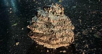 天降超巨型蜂巢橫躺路面 空巢無蜂群眾人虛驚