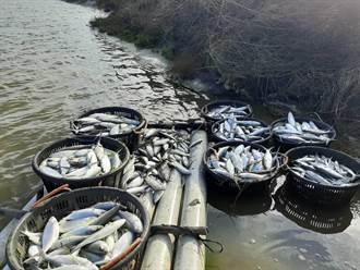 新一波寒流即將來襲 南市商議強化漁業災損通報機制