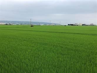 台中1.7萬公頃一期稻停灌 明起受理補償申請