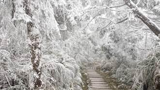 凜冬將至 專家曝低溫恐持續一整周 高山降雪機率大增