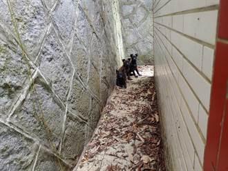 3幼犬遭棄置公墓 動保員徒步翻山救援
