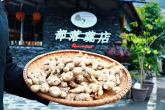 來義「部落蔬店」的生薑又小又醜 卻讓消費者愛不釋手