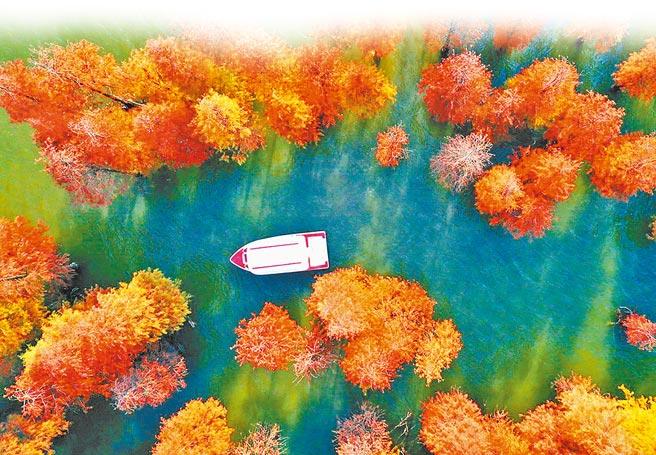 南寧市花花大世界景區的水杉林。(何光民攝)