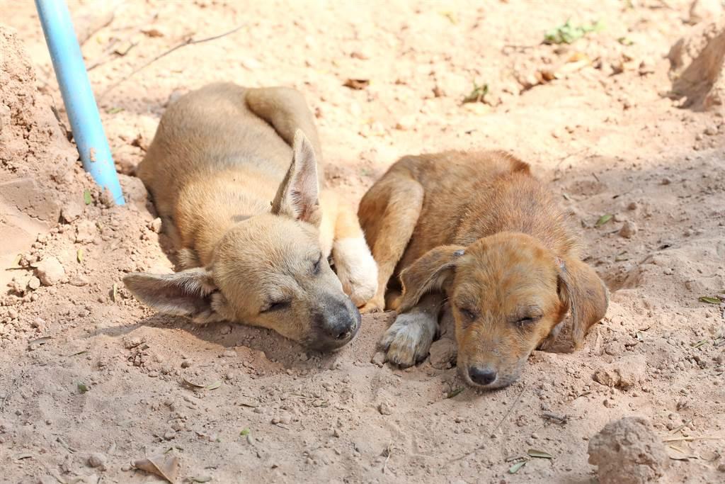 住戶發現家門口被扔了一隻幼犬,起初來以為是被人棄養,沒想到竟是狗媽媽上門求助。(示意圖/達志影像)