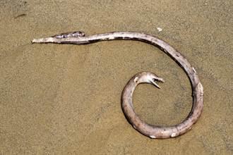 海怪出沒?2公尺不明生物被沖上岸 警方一看嚇傻