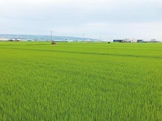 台中一期稻停灌 補償受理起跑