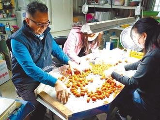 玉女番茄買氣旺 北部寒雨影響行情