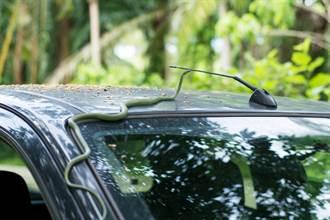 車窗冒出不速之客搭便車 駕駛嚇傻對視秒石化
