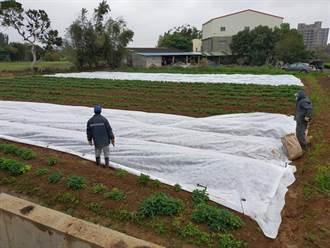 寒流袭农 桃改场列可能受灾风险作物 农友需加强防范措施