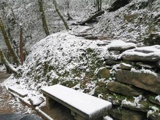 桃園拉拉山下午還在飄雪 林務局:雪積20公分厚!