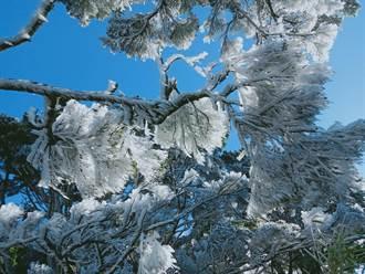 北大武山「霧淞」美景 草木像撒上糖霜美翻了!