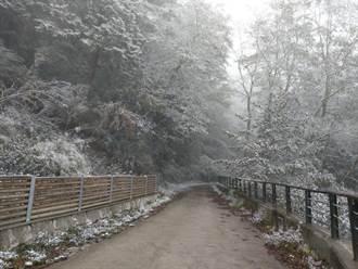 台東也下雪了!向陽森林遊樂區降瑞雪