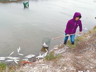 數十萬尾虱目魚凍斃 5成梨穗受損