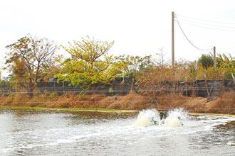 嘉義低溫9度 漁民加強防寒