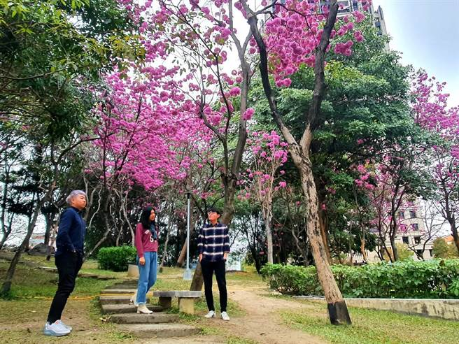 南屯區豐樂雕塑公園陸續綻放,歡迎民眾與家人走出戶外賞花。(台中市政府提供/陳世宗台中傳真)